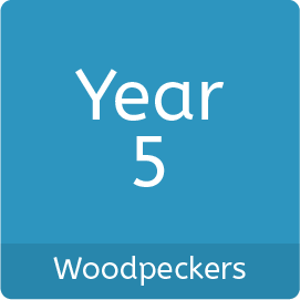Year5_Woodpeckers
